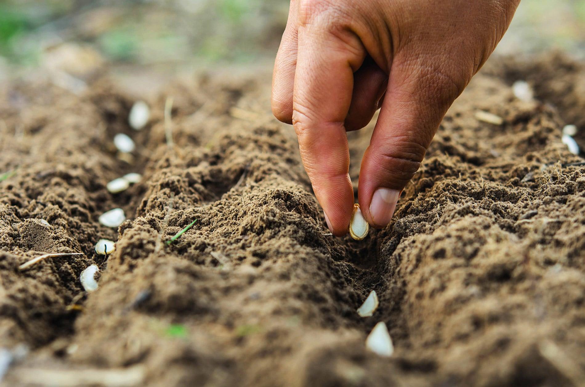Main plantant des graines dans la terre - page d